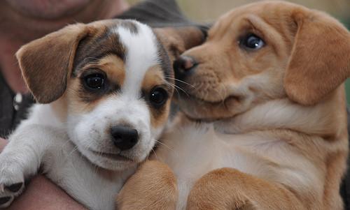 Puppy, puppy, 1-2-3!. Изображение № 6.