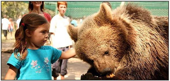 Lujan Zoo. Изображение № 1.