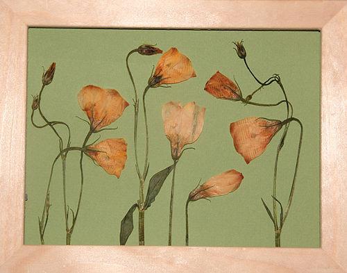 Вера и цветы. Изображение № 7.
