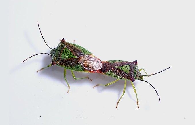 8 насекомых, которые заменят нам еду. Изображение № 8.