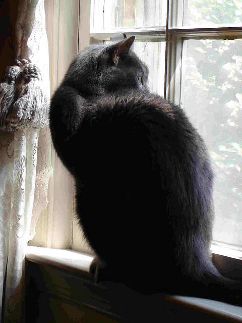 Cat. Window. Изображение № 7.