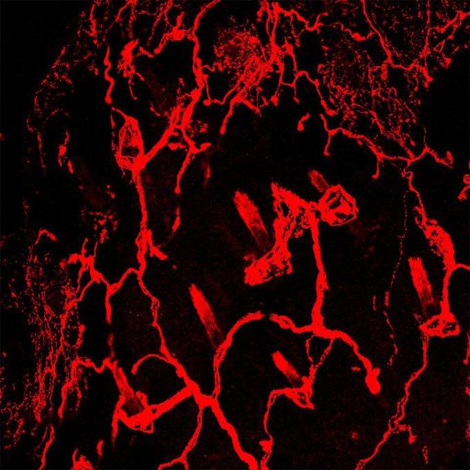 Фото дня: самое детализированное изображение нервов. Изображение № 5.