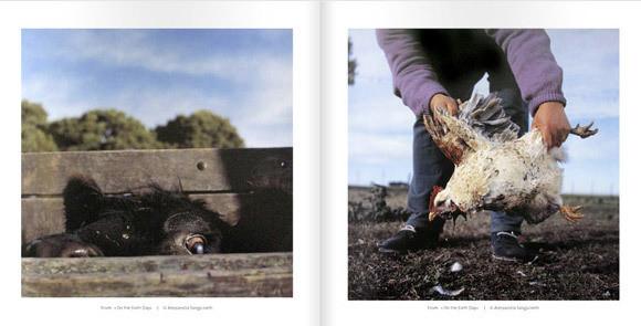 Изображение 9. Международный фестиваль фотокниг в Касселе.. Изображение № 9.