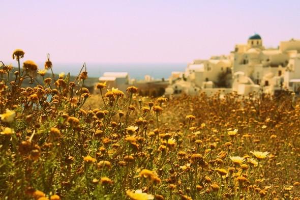 Санторини: Боги, вино и закаты. Изображение № 38.