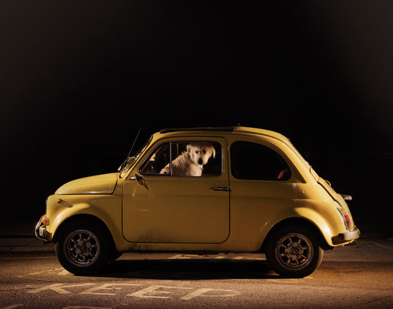 The silence of dogs in cars. Изображение № 3.