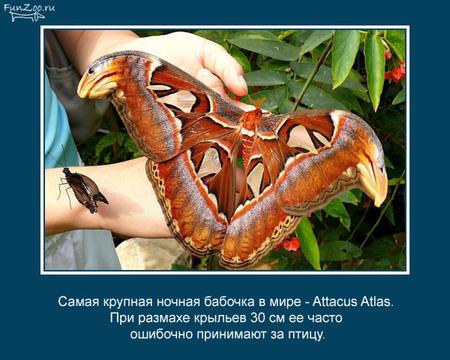 Животные иинтересные факты оних. Изображение № 7.