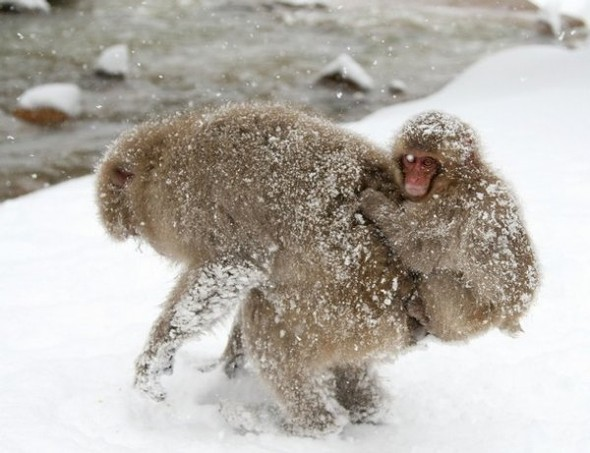 И даже обезьянам нужен отдых. Изображение № 1.