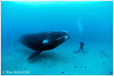 Победители Wildlife Photographer 2008. Изображение № 24.