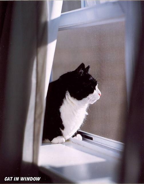 Cat. Window. Изображение № 21.