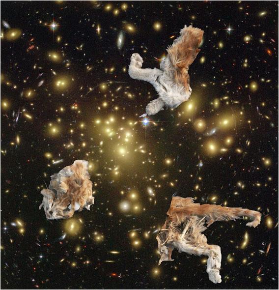 Белок на обочинах сверхновых. Изображение № 5.