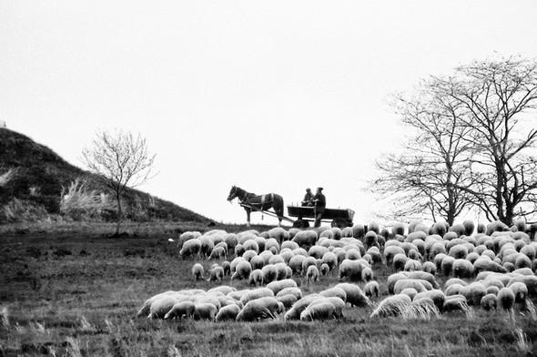 Черно-белые путешествия. Изображение № 30.