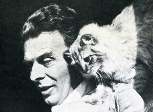 Знаменитые писатели и котики. Изображение № 22.