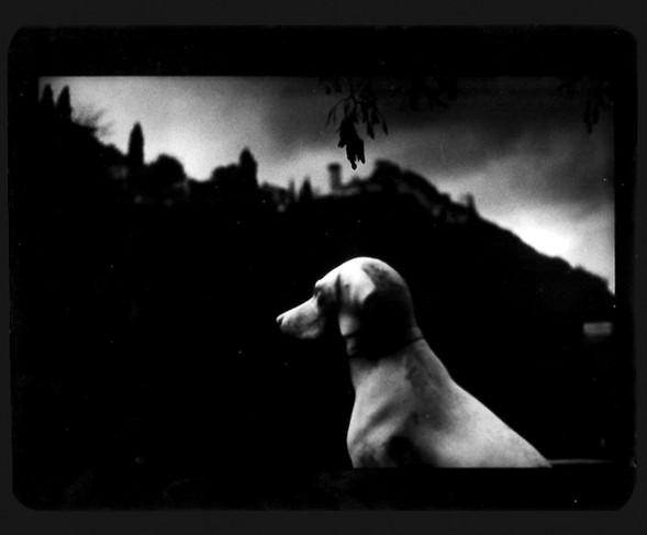 Джакомо Брунелли и«другие» животные. Изображение № 10.