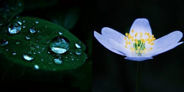 Весна в лесу. Изображение № 10.