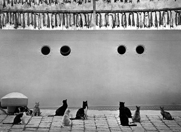Изображение 7. Фотограф: Пентти Саммаллахти.. Изображение № 17.