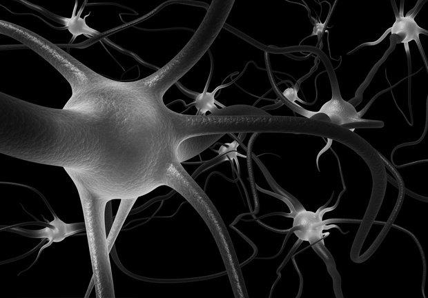 За логику и творчество отвечают разные полушария мозга?. Изображение № 2.