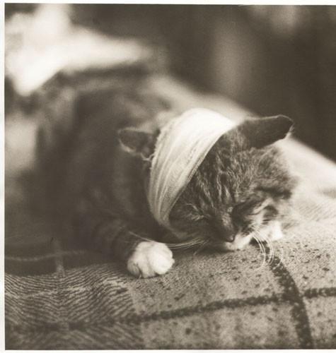 Блудливые коты. Изображение № 15.