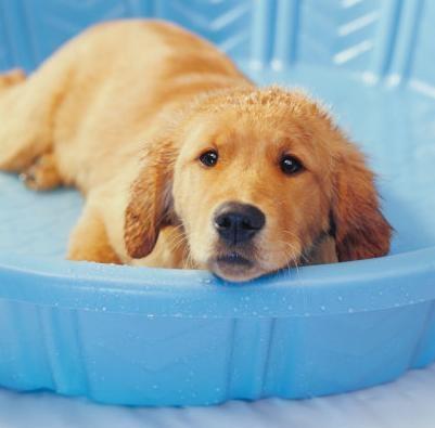 50 животных, которые ненавидят мыться. Изображение № 28.