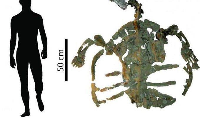 Найдены останки самой древней морской черепахи . Изображение № 1.