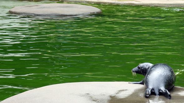 Бассейн с живыми тюленями. Изображение № 5.
