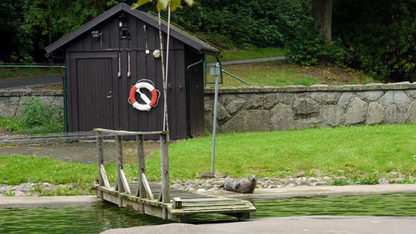 Бассейн с живыми тюленями. Зимой тут еще и пингвины бывают. Изображение № 4.