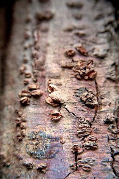 Treefilia. Изображение № 2.