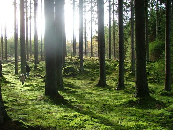Nature. Изображение № 8.
