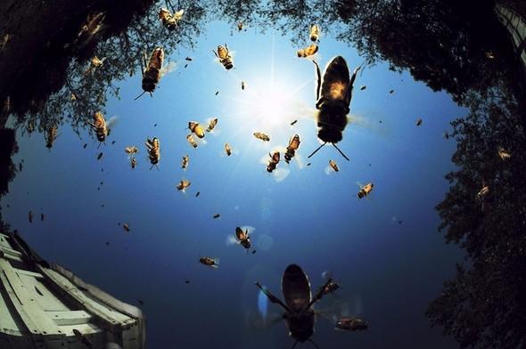 Фотоконкурс National Geographic 2010. Изображение № 3.
