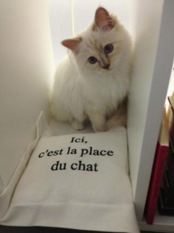 Кошка Карла Лагерфельда снялась для i-D. Изображение № 1.