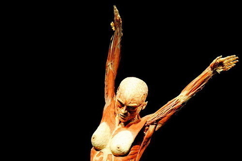 Скандальная выставка анатома Гюнтера ФонХагенса. Изображение № 1.