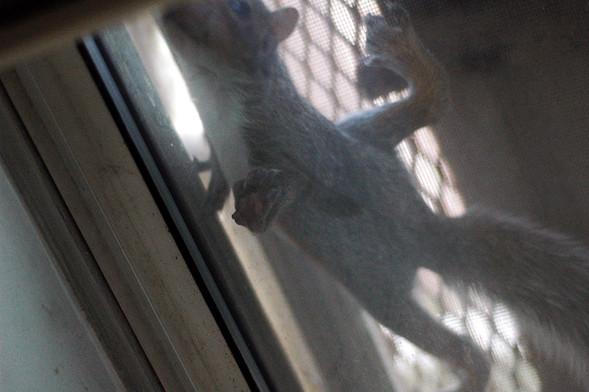 Белка в нашем окне. Изображение № 22.