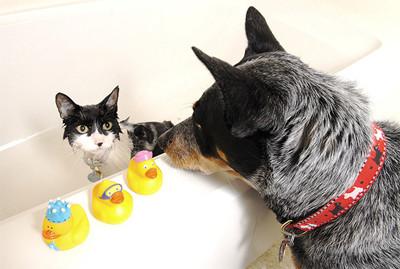 50 животных, которые ненавидят мыться. Изображение № 44.