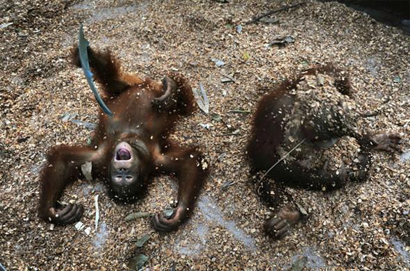 Лоун Дрошер-Нилсен и её обезьянки. Изображение № 9.