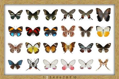 8 приложений  для наблюдения  за природой . Изображение № 51.
