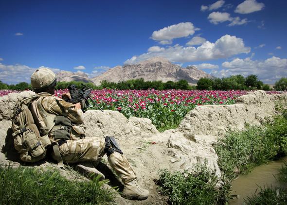 Eyes on Mount Doom.  На пешем патруле в области цветущих полей опийных маков. Неестественные тишина и спокойствие могут быть нарушены в любой момент.. Изображение № 2.