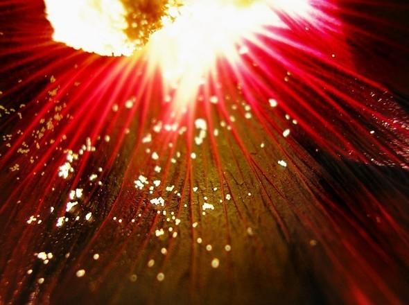 Время цветения. Изображение № 6.