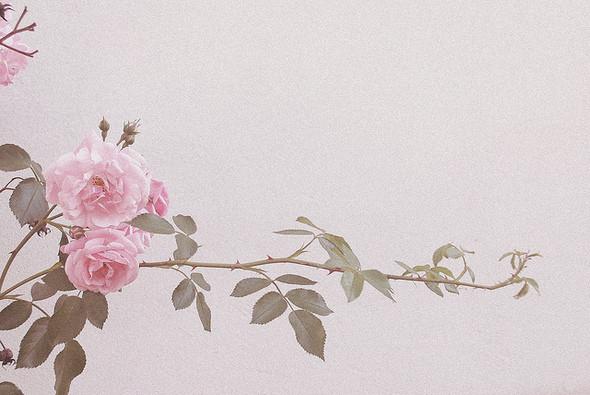 Изображение 5. Никогда не надо слушать, что говорят цветы. Надо просто смотреть на них и дышать их ароматом... Изображение № 5.