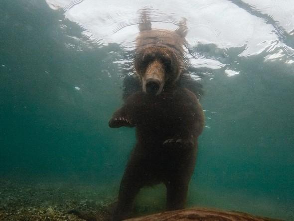 Лучшие новые снимки от National Geographic. Изображение № 37.