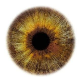 Фотограф Rankin — Eyescapes. Изображение № 3.