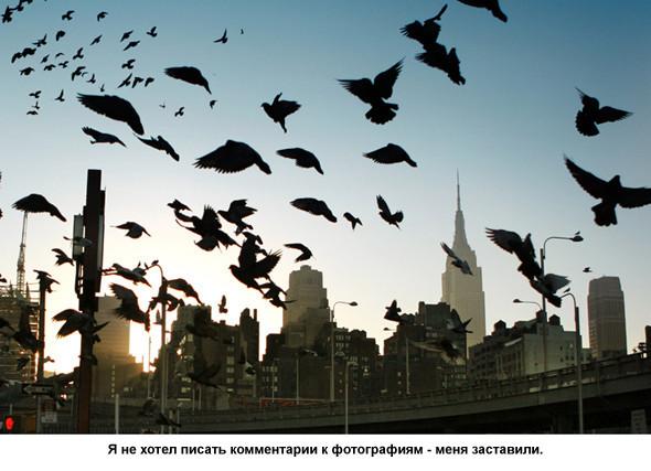 Фотограф – Виталий Шепелев. Изображение № 3.