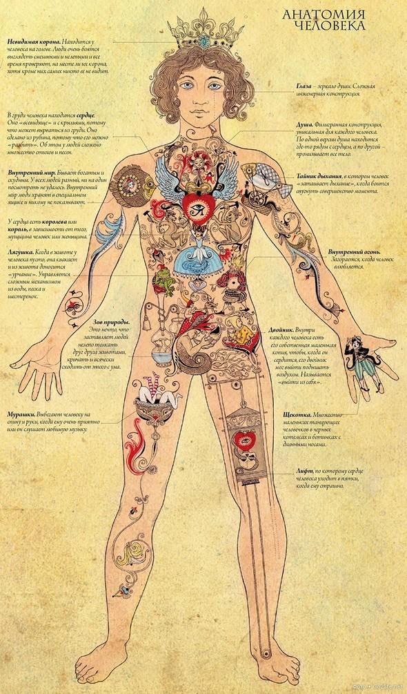 Картинка внутреннего мира. Оригинальная анатомия человека. Изображение № 1.