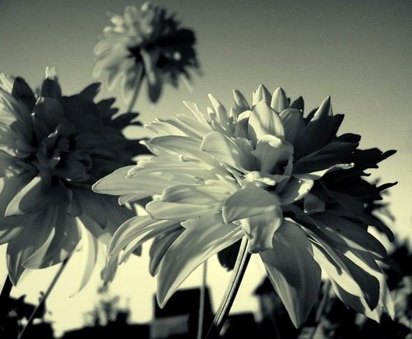 Время цветения. Изображение № 9.