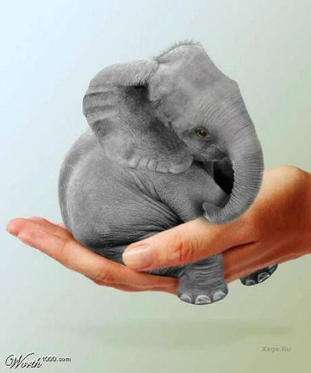 Какспрятать слона. Изображение № 14.
