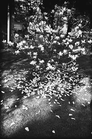 Андерш Петершен - живая легенда шведской фотографии. Изображение № 26.
