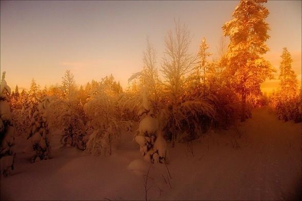 Изображение 29. Выходные в шведском лесу.. Изображение № 29.