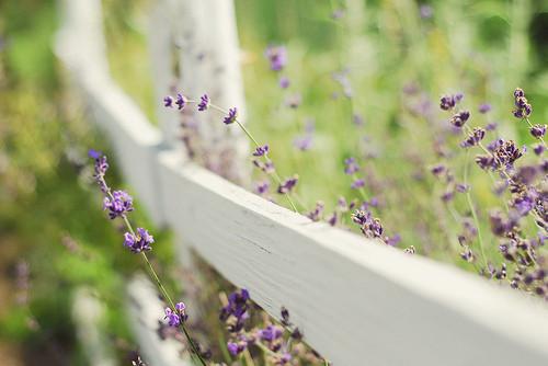 Изображение 21. Никогда не надо слушать, что говорят цветы. Надо просто смотреть на них и дышать их ароматом... Изображение № 21.