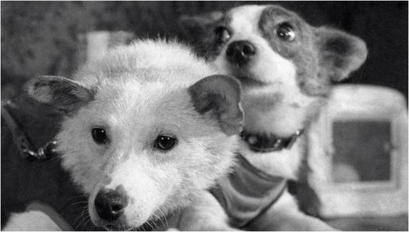 10 самых известных собак в истории по версии журнала WOW!. Изображение № 1.