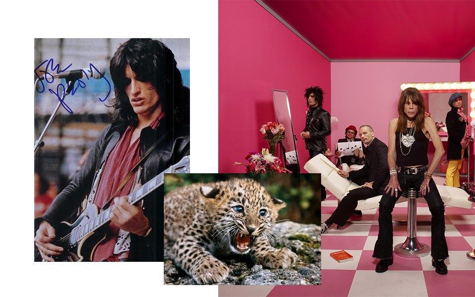 Глэм-панк, Электрогитара, Леопард. Изображение № 14.