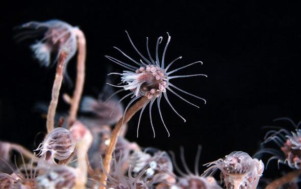 Фотография Александра Семенова: космос подводного мира. Изображение № 7.