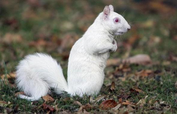 Животные-альбиносы. Изображение № 23.